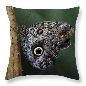 Giant Owl Butterfly On Screw Pine Throw Pillow
