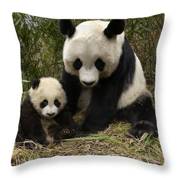 Throw Pillow featuring the photograph Giant Panda Ailuropoda Melanoleuca by Katherine Feng