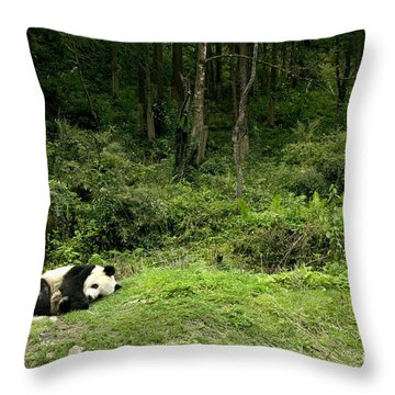 Giant Panda Asleep By The Forest Throw Pillow
