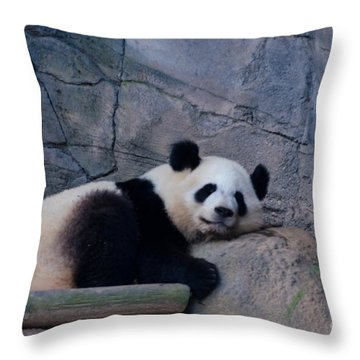 Giant Panda Throw Pillow by Donna Brown