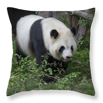 Giant Panda Throw Pillow by Wade Aiken