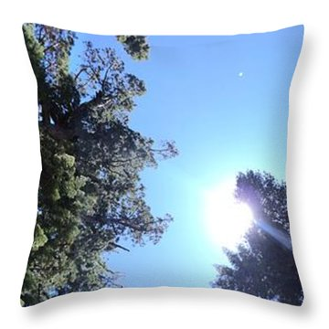 Giant Redwood Throw Pillow by Beverly Johnson
