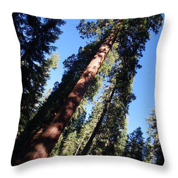 Giant Redwood Trees Throw Pillow by Jeff Lowe