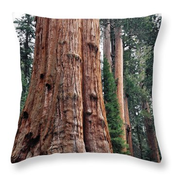 Throw Pillow featuring the photograph Giant Sequoia II by Kyle Hanson