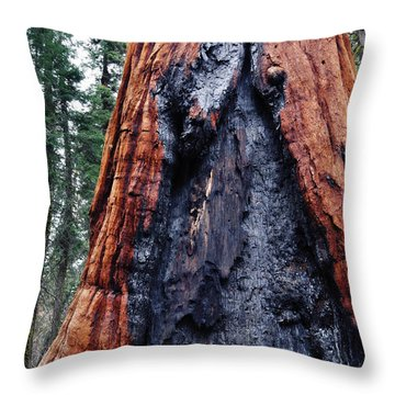Throw Pillow featuring the photograph Giant Sequoia by Kyle Hanson