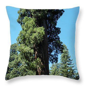 Giant Sequoia, Sequoia Np, Ca Throw Pillow