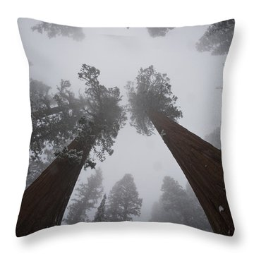 Giant Sequoias Throw Pillow by Gregory G. Dimijian, M.D.