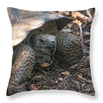 Giant Tortoise At Urbina Bay On Isabela Island  Galapagos Islands Throw Pillow