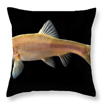 Gii Golden Line Barbel Throw Pillow
