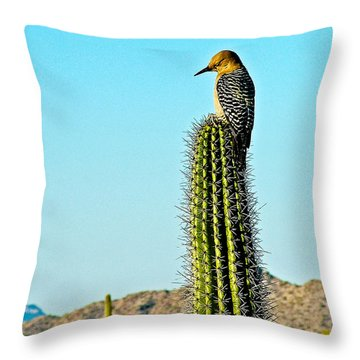 Gila Woodpecker On Saguaro In Organ Pipe Cactus National Monument-arizona Throw Pillow by Ruth Hager