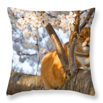 Ginger Cherry Blossom Cat Throw Pillow