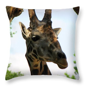 Throw Pillow featuring the photograph Giraffe by Beth Vincent