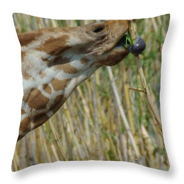 Giraffe Feeding 1 Throw Pillow by Robyn Stacey