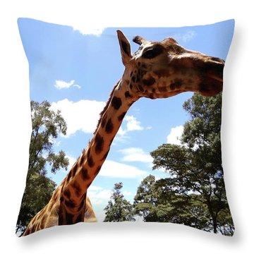 Giraffe Getting Personal 3 Throw Pillow