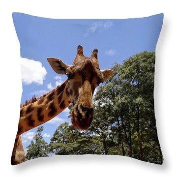 Giraffe Getting Personal 4 Throw Pillow