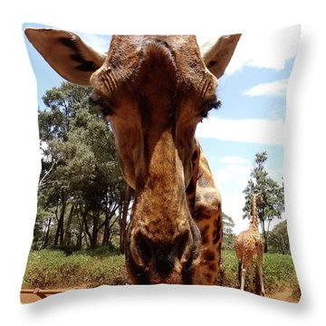 Giraffe Getting Personal 6 Throw Pillow