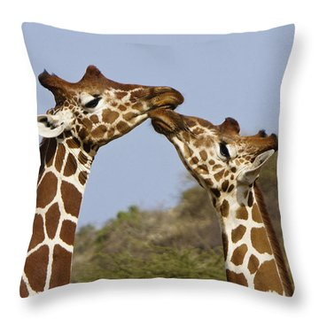 Giraffe Kisses Throw Pillow