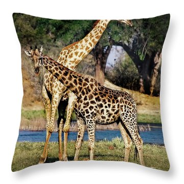Giraffe Mother And Calf Throw Pillow
