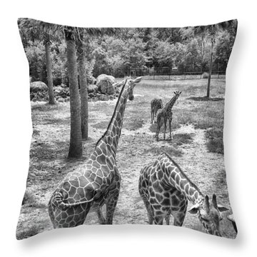 Throw Pillow featuring the photograph Giraffe Reticulated by Howard Salmon