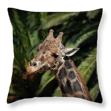 Throw Pillow featuring the photograph Giraffe  by Roger Mullenhour