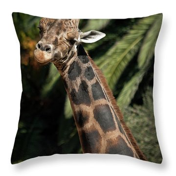 Throw Pillow featuring the photograph Giraffe Study 2 by Roger Mullenhour
