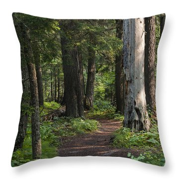Throw Pillow featuring the photograph Glacier National Park Woodland Trail by Kevin Blackburn