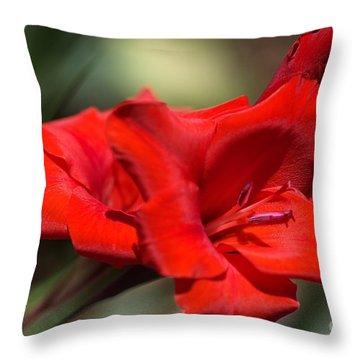 Gladioli Manhattan Variety  Throw Pillow