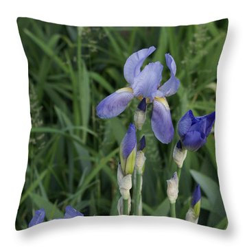 Glads Throw Pillow by Cynthia Powell