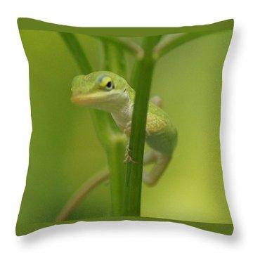 Glaring Lizard Throw Pillow by Paul  Wilford
