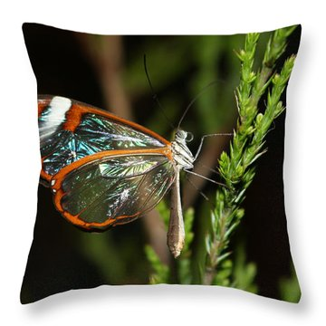 Glasswinged Butterfly Throw Pillow