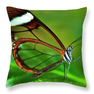 Throw Pillow featuring the photograph Glasswinged Butterfly by Ralph A Ledergerber