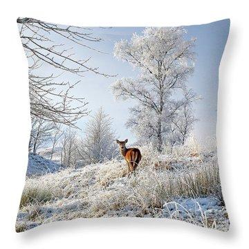 Throw Pillow featuring the photograph Glen Shiel Misty Winter Deer by Grant Glendinning