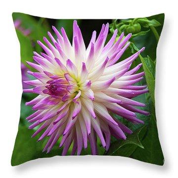 Glenbank Twinkle Dahlia 2 Throw Pillow
