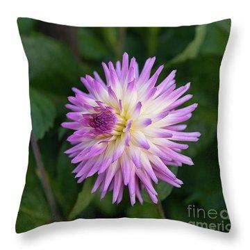 Glenbank Twinkle Dahlia 3 Throw Pillow