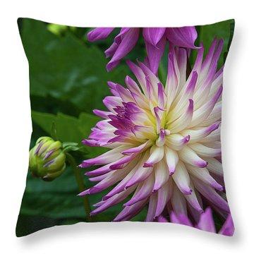 Glenbank Twinkle Dahlia 4 Throw Pillow