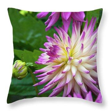 Glenbank Twinkle Dahlia Throw Pillow by Glenn Franco Simmons