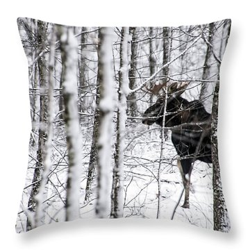Glimpse Of Bull Moose Throw Pillow