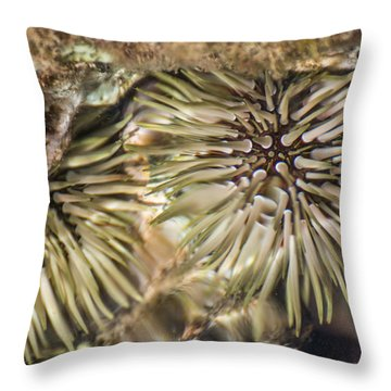 Throw Pillow featuring the photograph Glistening by Colleen Coccia