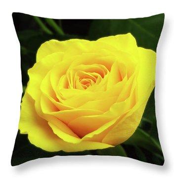 Glorious Yellow Rose Throw Pillow