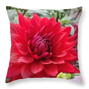 Glory Crimson Dahlia  Throw Pillow