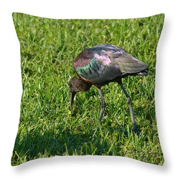 Throw Pillow featuring the pyrography Glossy Ibis by Sally Sperry