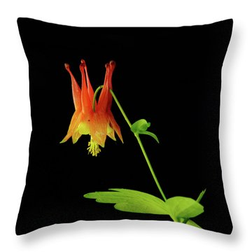 Glowing Colombine Throw Pillow