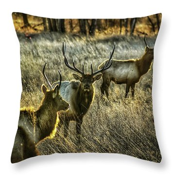 Glowing Herd Throw Pillow