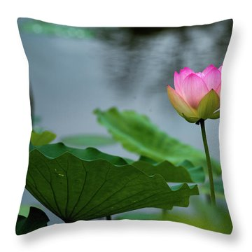 Throw Pillow featuring the photograph Glowing Lotus Lily by Dennis Dame
