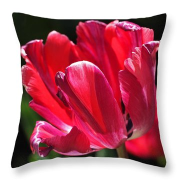 Glowing Red Tulip Throw Pillow by Rona Black