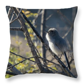 Gnatcatcher Throw Pillow