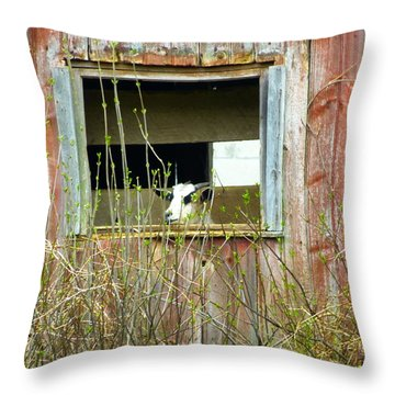 Goat In The Window Throw Pillow by Donald C Morgan