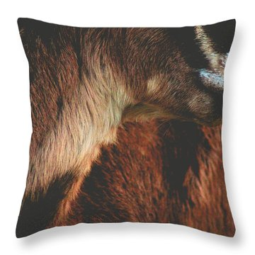 Throw Pillow featuring the photograph Goat Love by Viviana  Nadowski