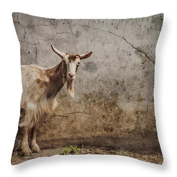 London, England - Goat Throw Pillow