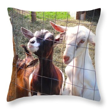 Throw Pillow featuring the photograph Goats by Felipe Adan Lerma